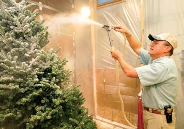 Dreaming Of White Christmas Folks Flock To Flocked Trees
