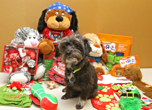 Petsmart Christmas Hours.Pet Shopping Don T Forget Your Four Legged Friends This