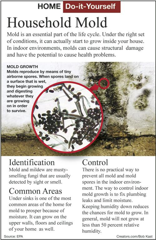 Here S How To Eliminate Mold In Your Home Siouxland Homes