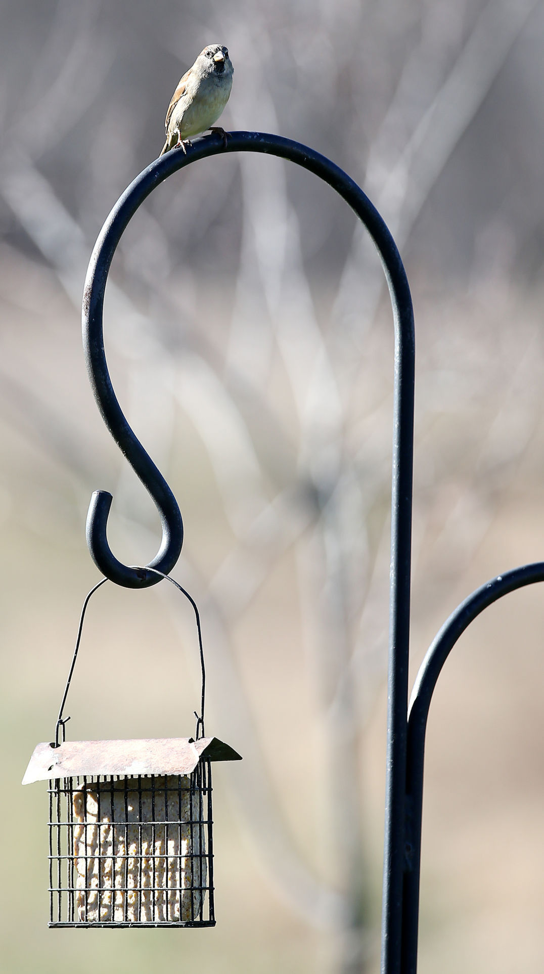 Should you feed wildlife in the winter?   Siouxland Life ...