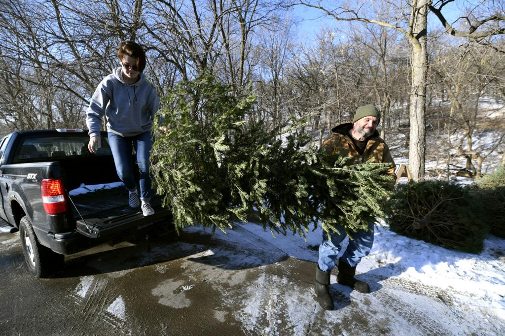 Ankeny Christmas Tree Pickup 2021 Have A Christmas Tree To Dispose Of Here S What To Do Across Siouxland Local Lifestyles Siouxcityjournal Com