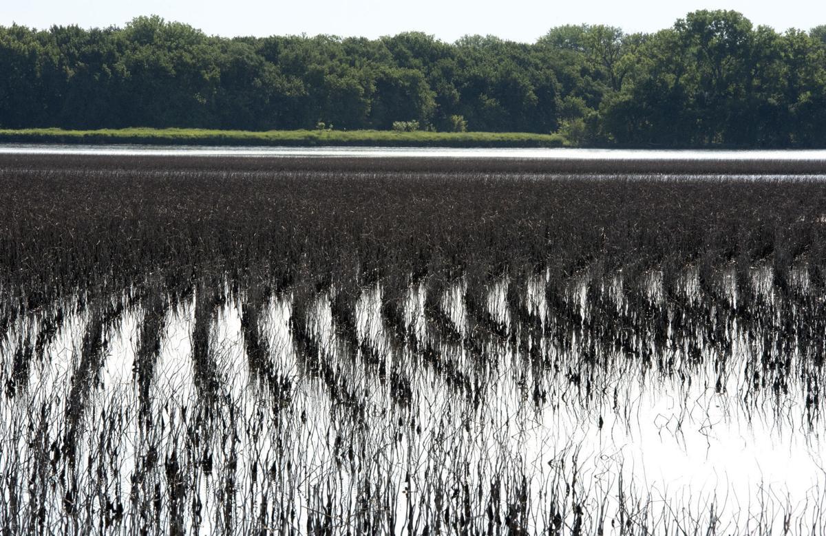 2019 farm field flooding