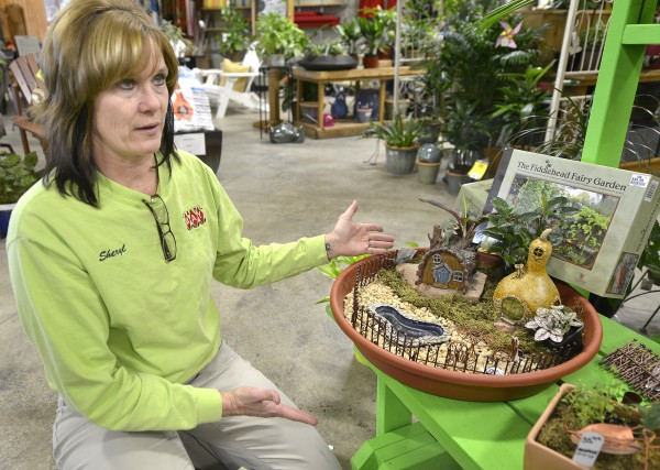 Tiny Treasures Fairy Gardens Provide An Indoor Forest