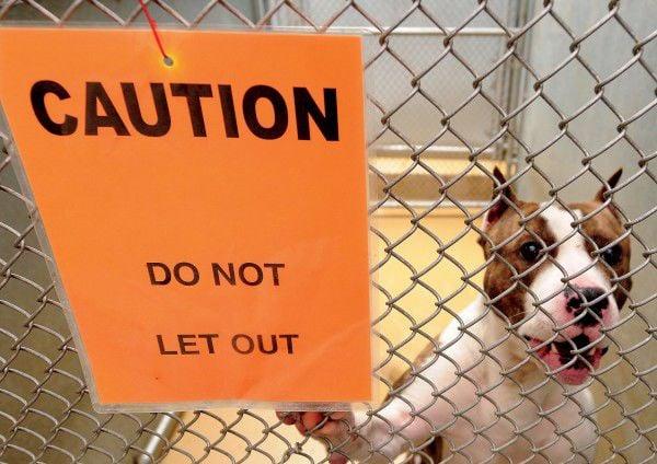 Pit bull dog ban