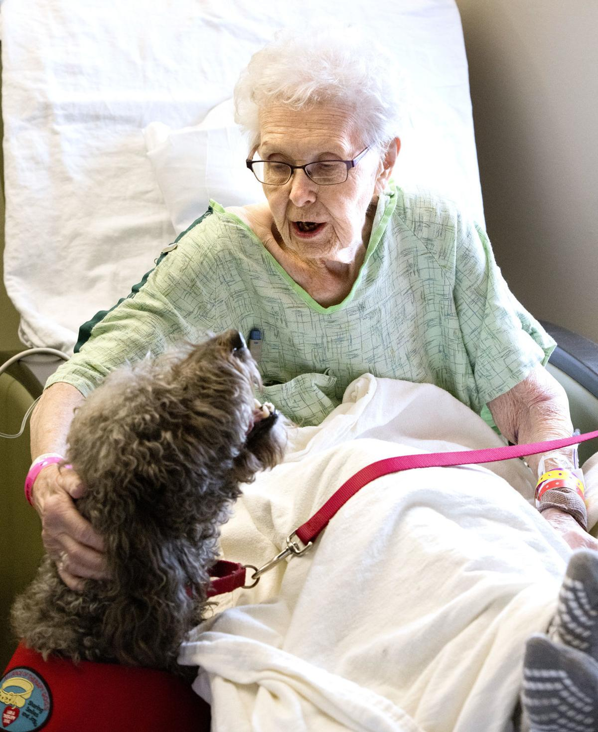 Hospital pet therapy