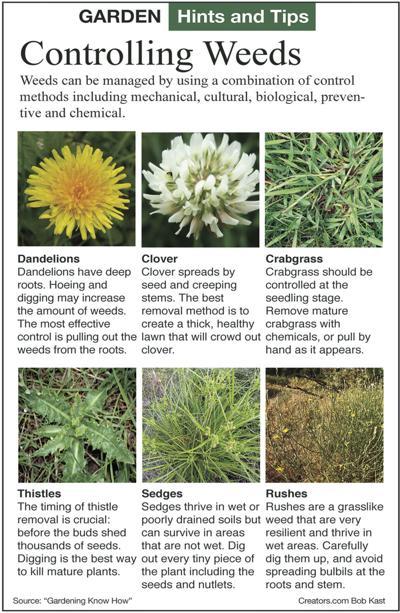 GardenTips.0628