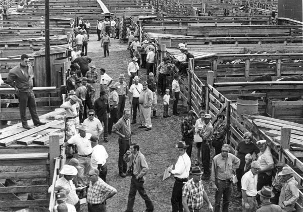 Sioux City Stockyards circa 1960s