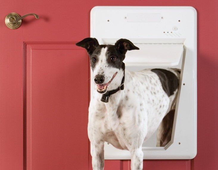 This Automated Pet Door Is Worth Every Cent Home And Garden