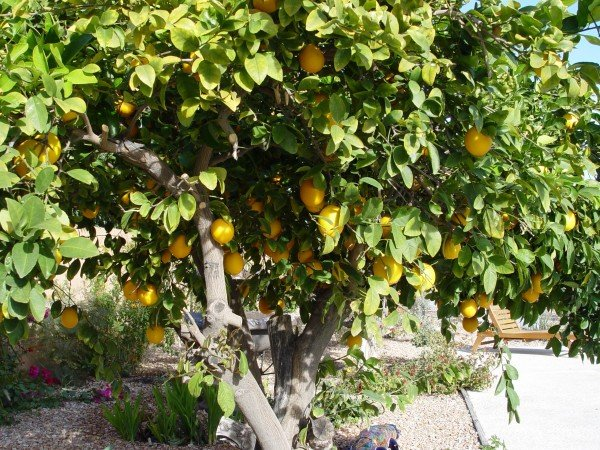 growing fruit trees from seed wont yield the fruit you