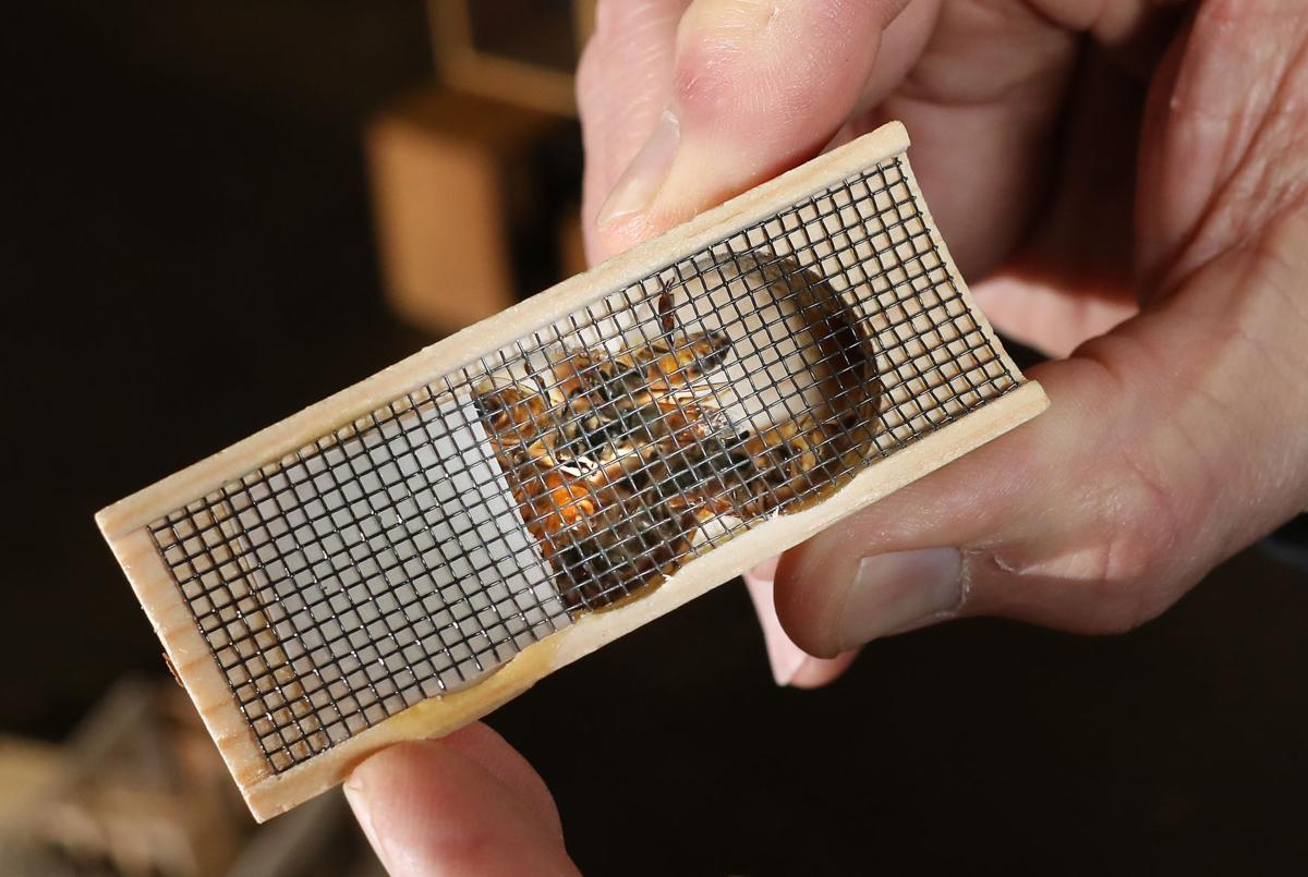 Duane Bajema beekeeping