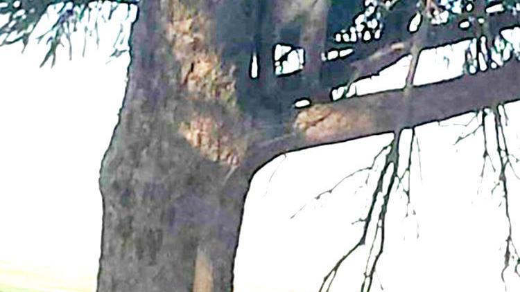 First confirmed female mountain lion in Iowa killed near Galva