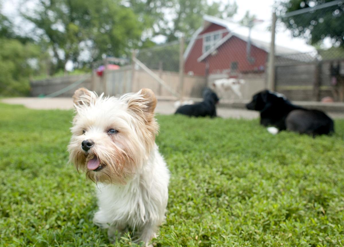 Sioux City Iowa Dog Boarding