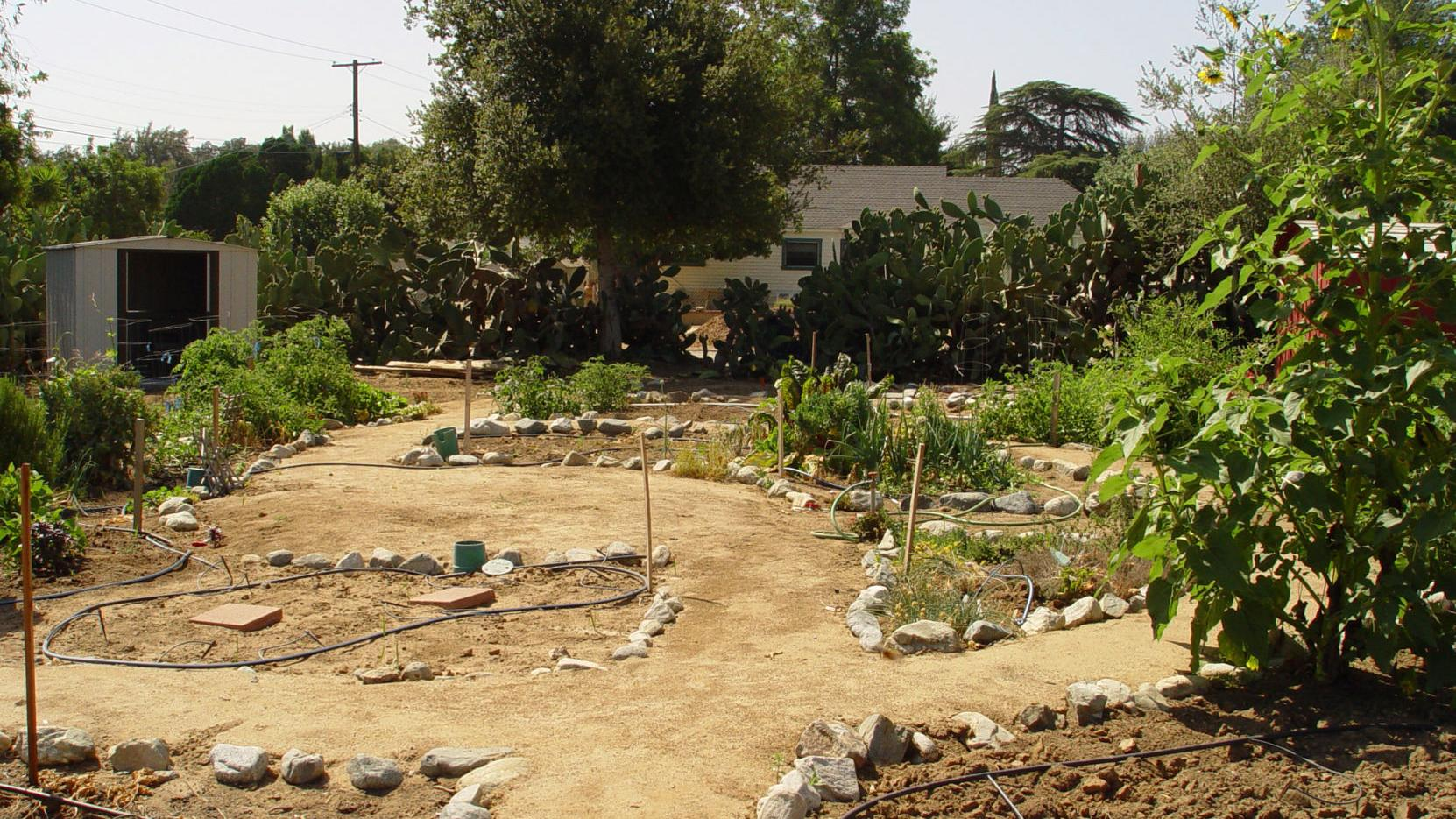 How to start your first garden (while saving money)