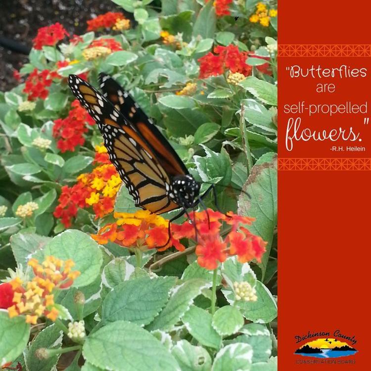 Butterflies are self-propelled flowers