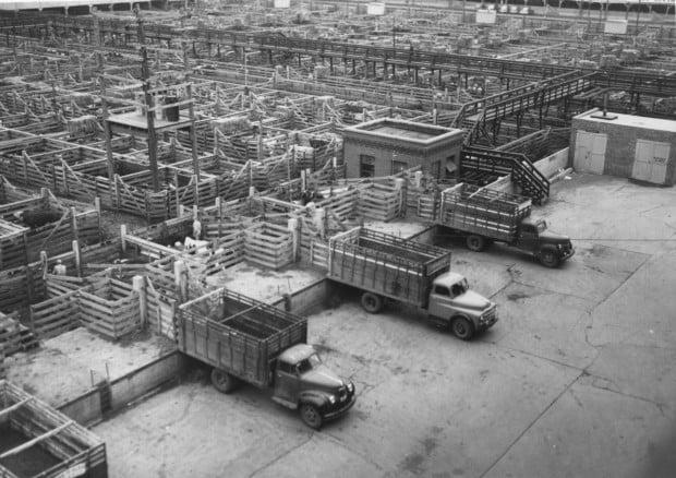 Stockyards - trucks loading cattle
