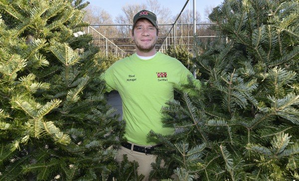 Christmas Trees That Are Designed To Please Local