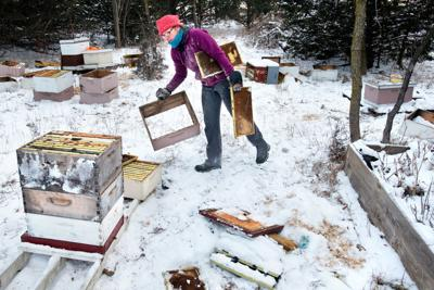 Wild Hill Honey Vandalism