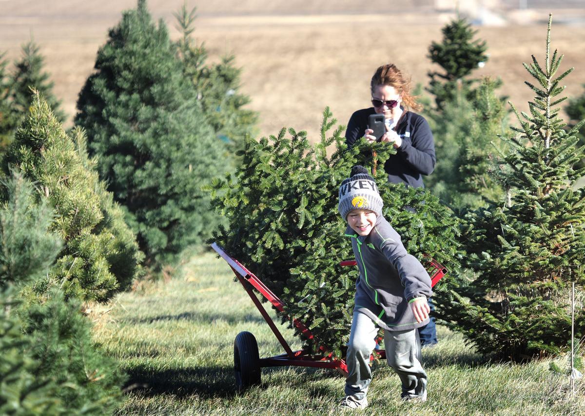 Country Pines Christmas Tree Farm