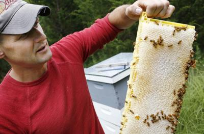 Wild Hill Honey