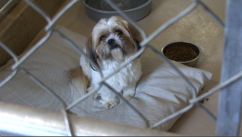 Wiggles remains behind bars