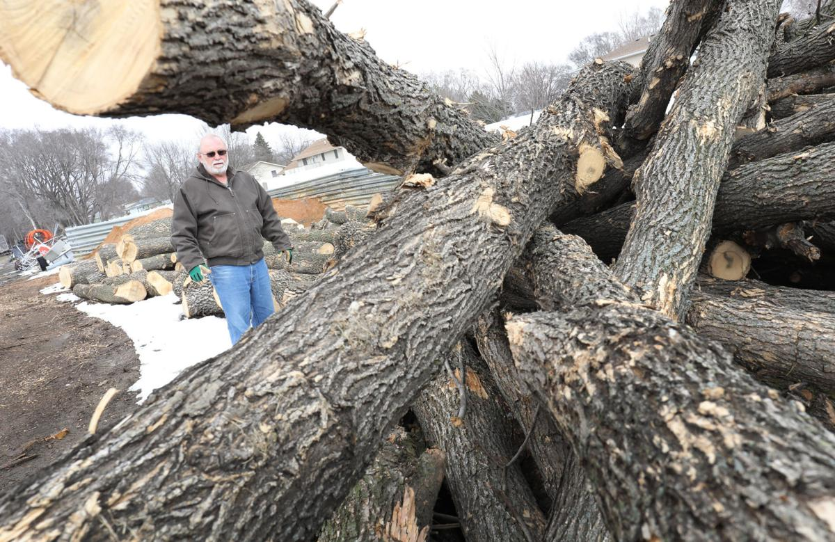 South Sioux City Ash trees