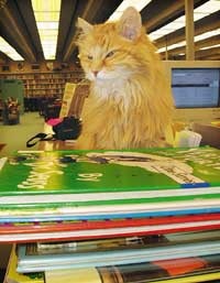 The book on Dewey: He's one cool cat