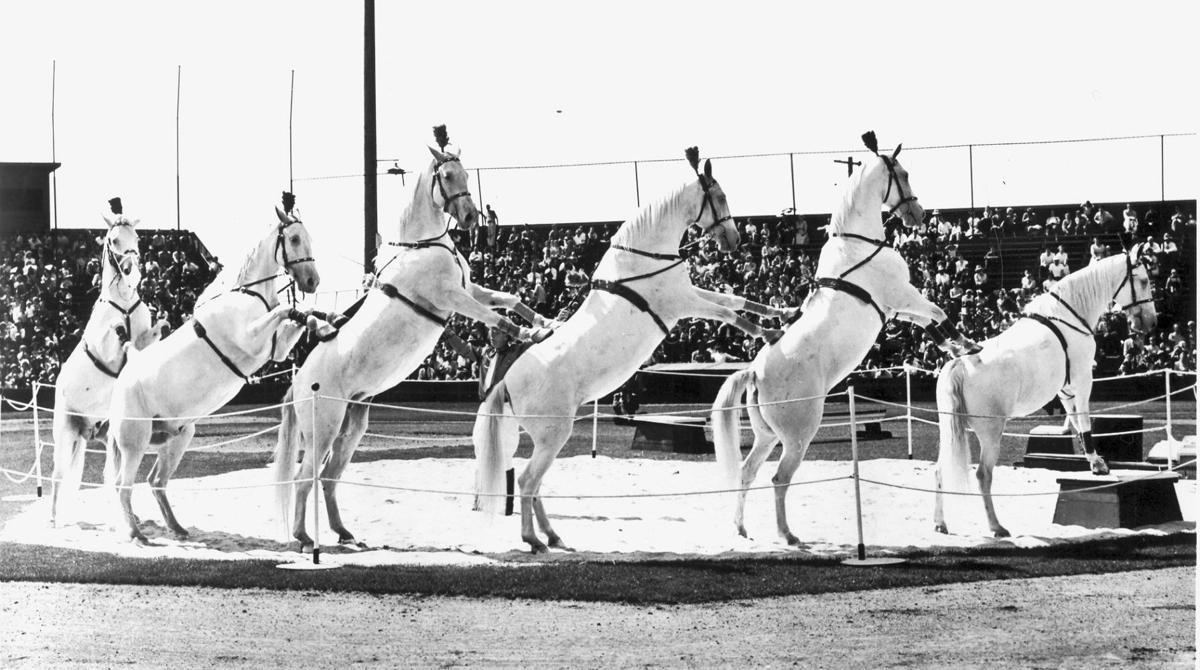 White Horse Mounted Patrol