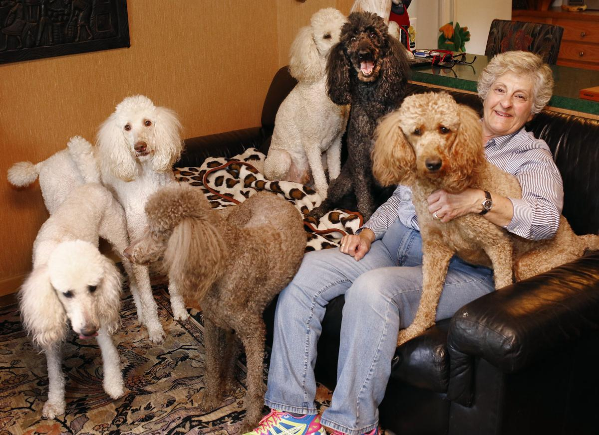 6 Poodles And Parrot Make A Full House For Sioux City