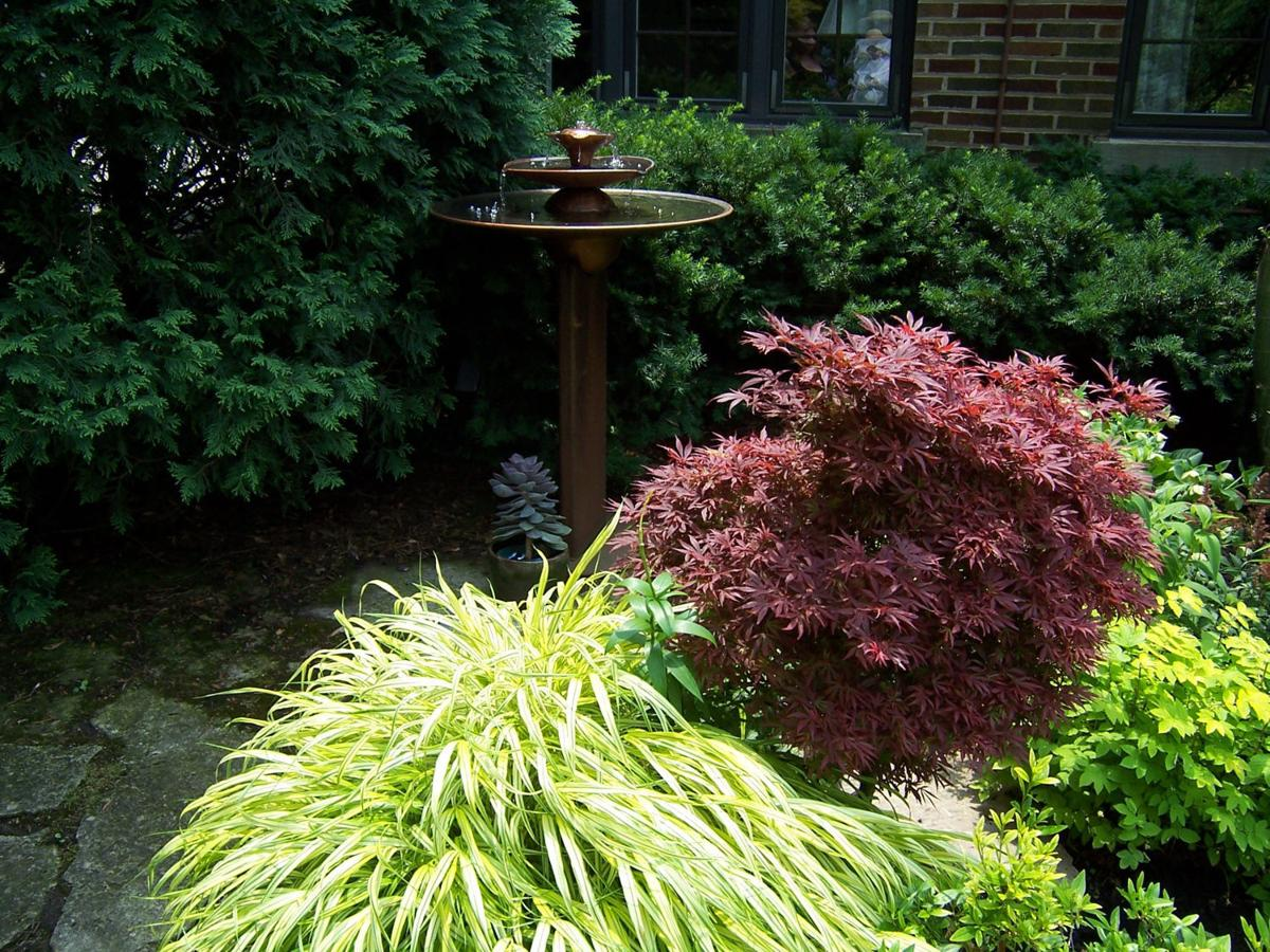 Growing Beyond Hostas Planting Ideas To Enliven Your Shade Garden