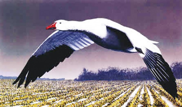 outdoors Snowgoose
