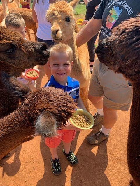 National Alpaca Farm Days coming