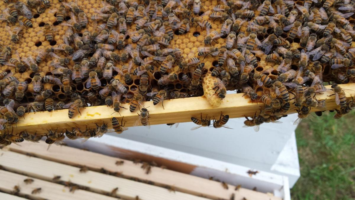 Moonshine Beekeepers Association to hold beginner's class
