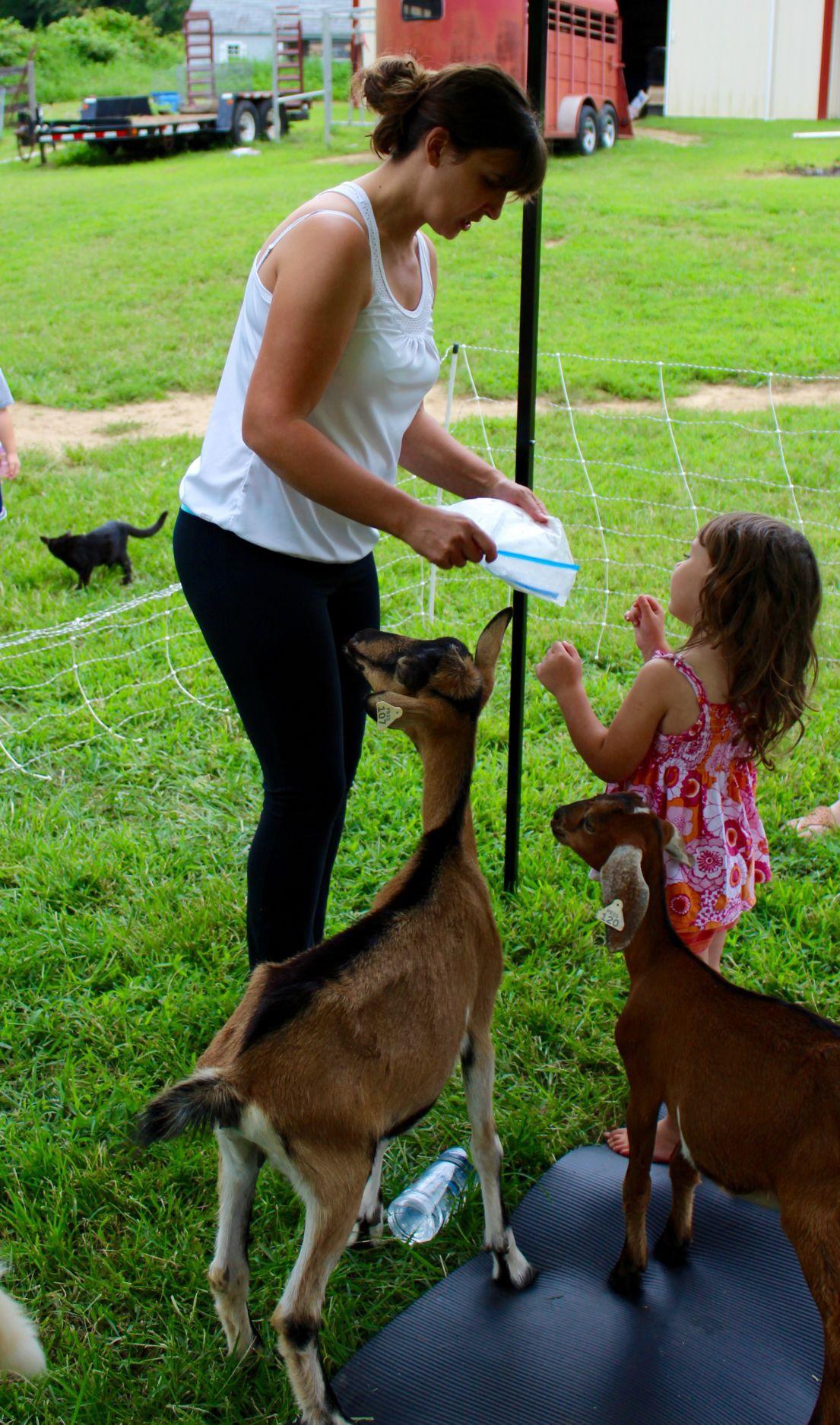 barnyard meets downward dog in sunderland spotlight somdnews com