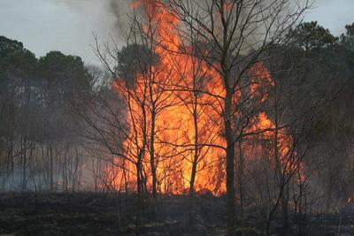 Maryland on alert for dangerous wildfire conditions