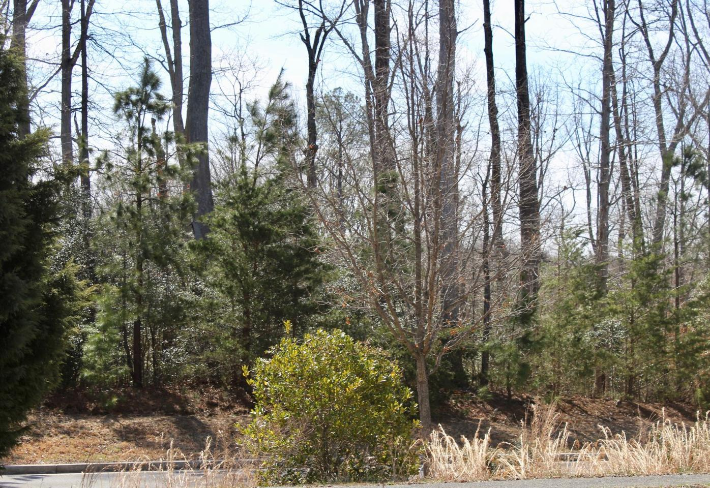 Lusby wooded area