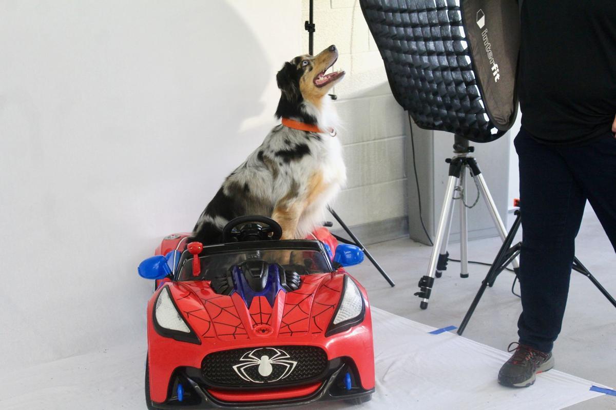 Dog drives