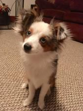 Grand Prize Winner: Dog