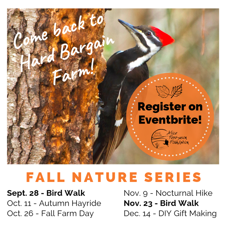 Bird Walk at Hard Bargain Farm