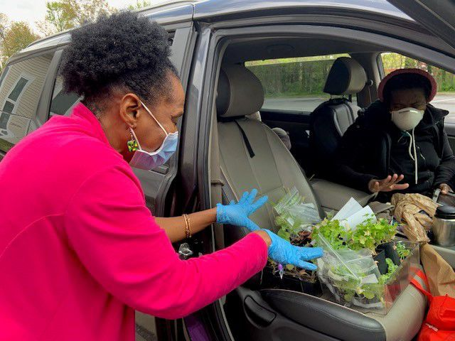 Melwood partners to donate flower, vegetable plants to needy