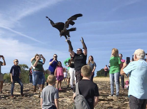 Born to be wild: Patton the eagle released after rehabilitation