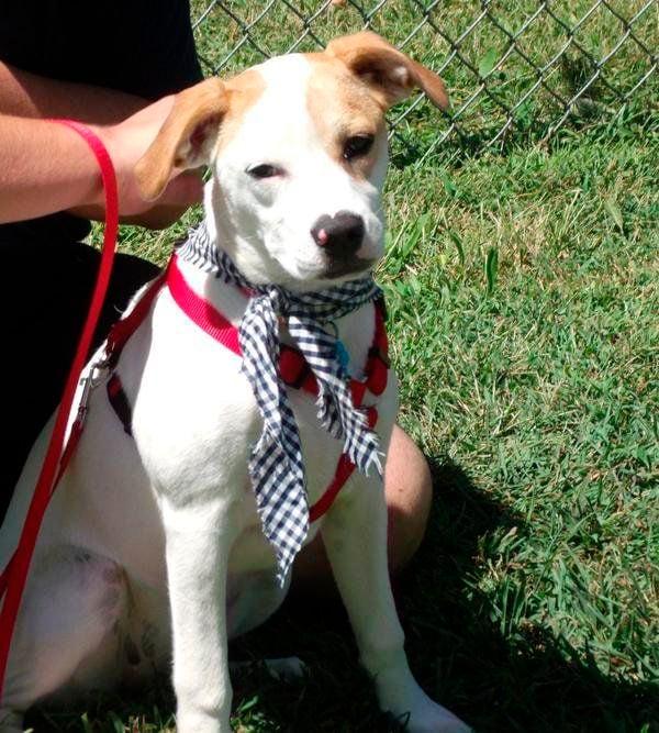 Humane Society Adoption event set for Saturday