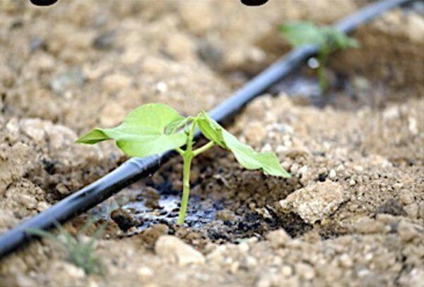 Keep a step ahead of vegetable garden diseases