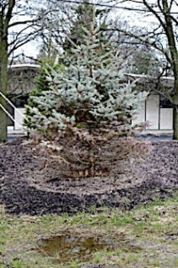 Spring rains can bring root rots to ornamentals