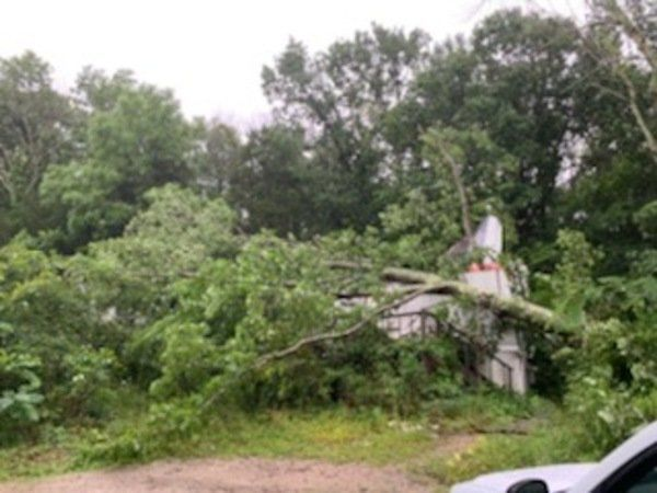 Man okay after tree falls on home during storm