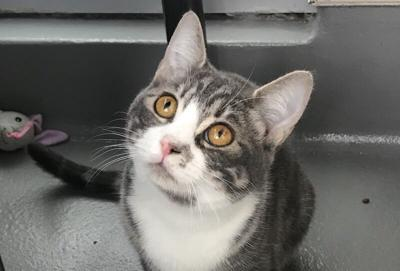 Wendy the cat