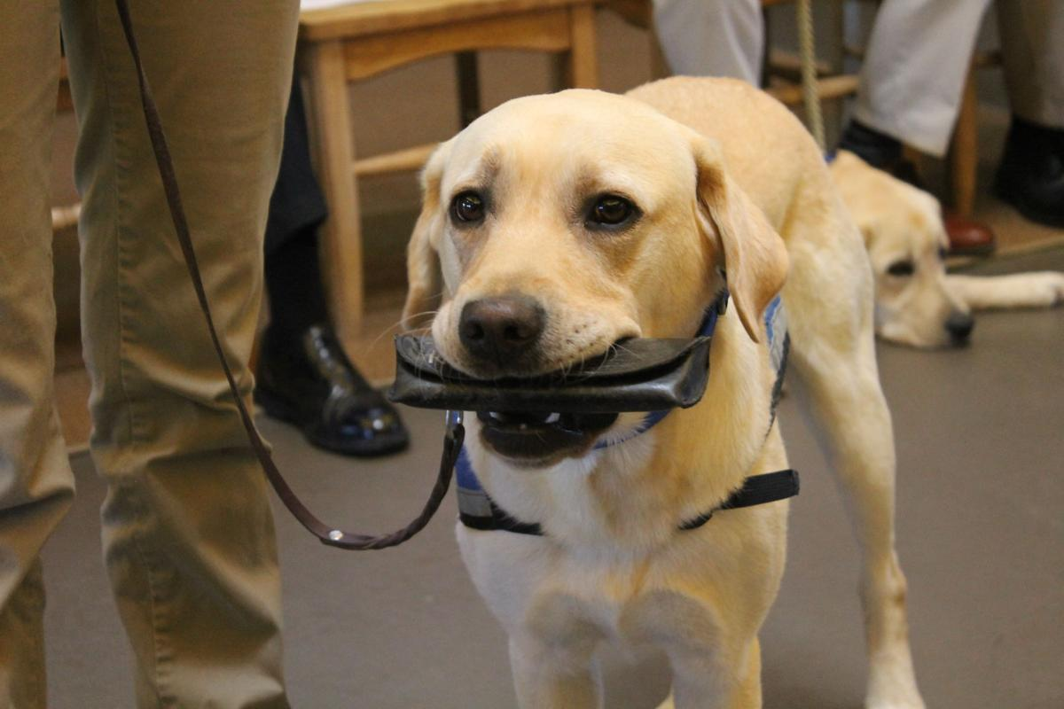 Service Dogs Helping Vets Find Their Lives Again News