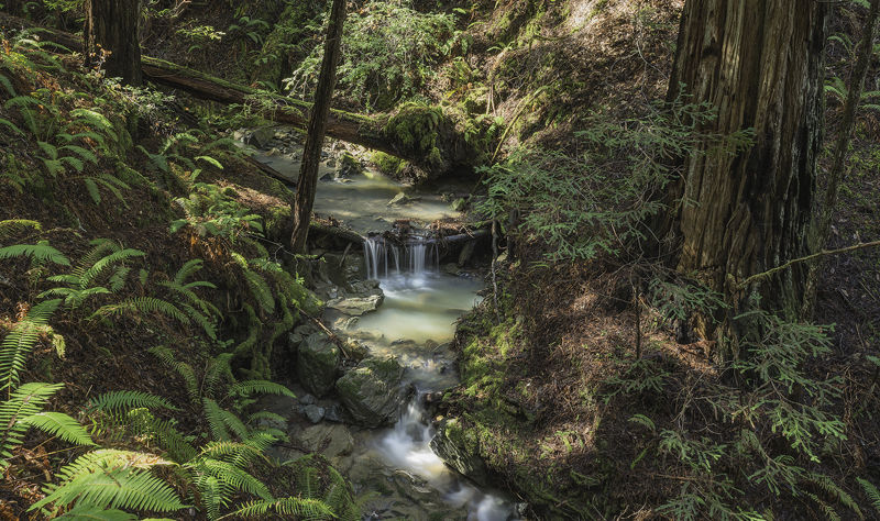 redwood league buys largest privately owned old growth coast redwood