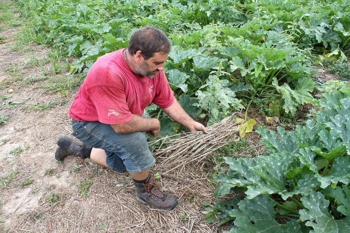 No-till farming conserves soil moisture