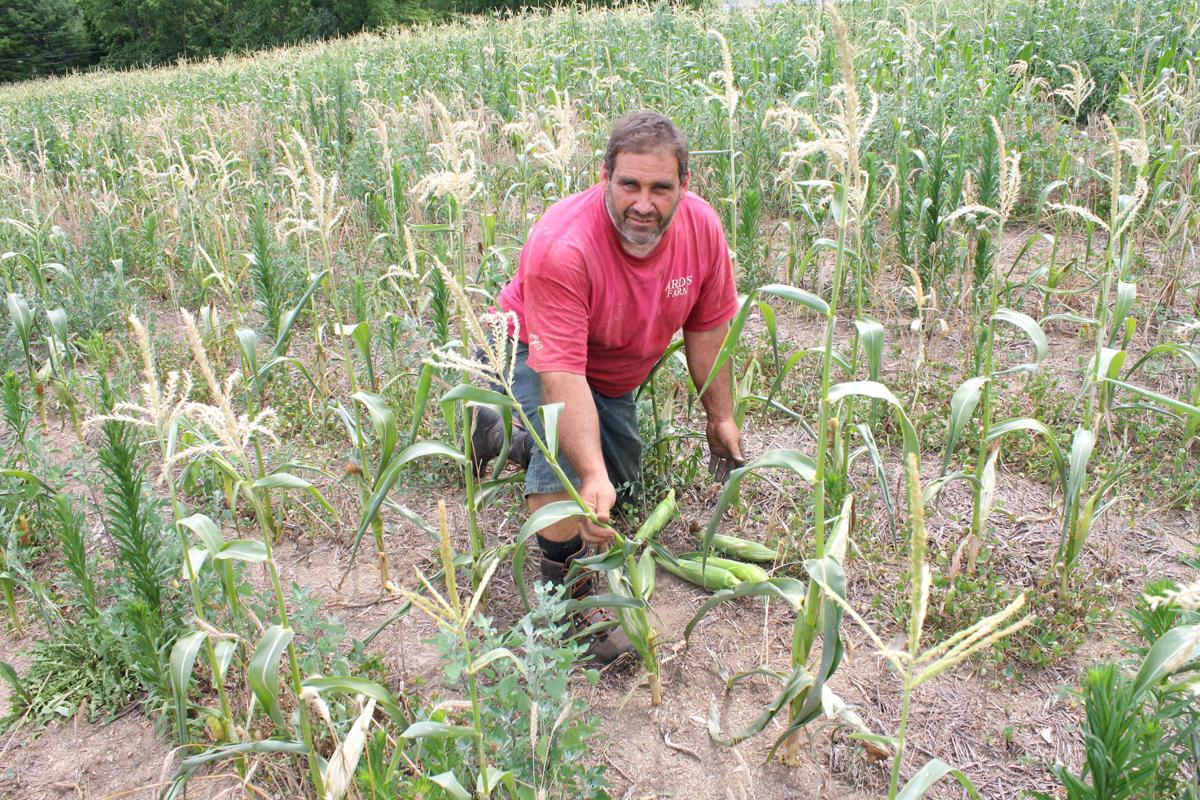 Spotty rainfall hurting local farms