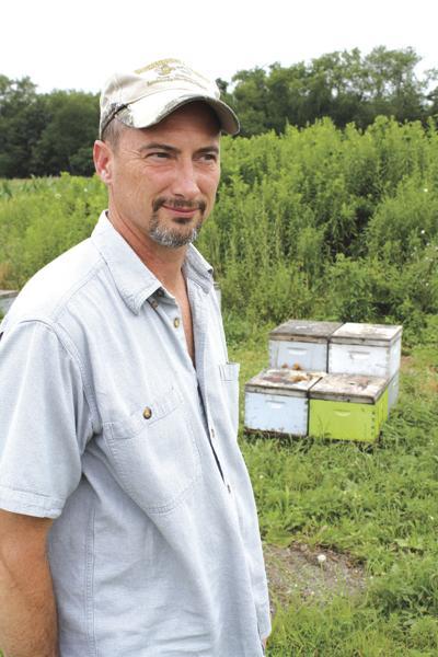 Bee crisis getting worse